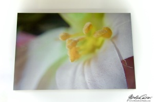 False Spring Dead Summer PRINT - 1