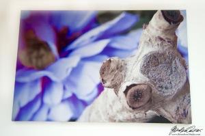 False Spring Dead Summer PRINT - 9